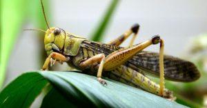 2014_08_30_0f_locusts.3c2ff