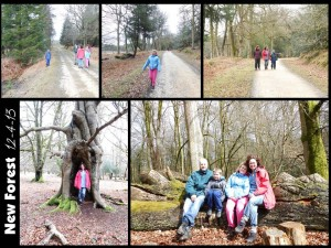 New Forest 12-4-13
