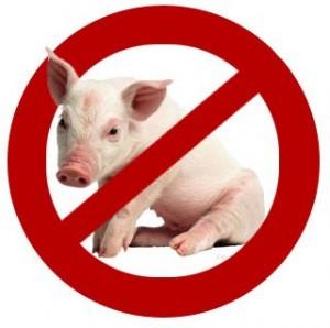 kosher-pig